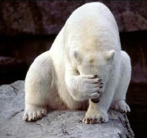 L'assureur Lloyd's s'inquiète des forages en Arctique